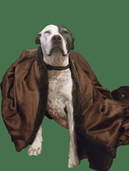 Bella in a blanket