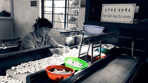 Woman sorting cocoons